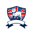 Proud english bulldog british flag shield vector image