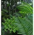 background jungle of tropical plants vector image