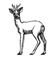 roe deer from forest vector image