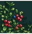 Bush cowberry vector image