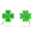 lucky clover vector image