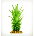 Pineapple top vector image vector image