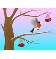 Bullfinch2 vector image