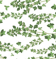 seamless texture of thyme vector image vector image