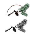 pine tree branch vector image