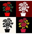 poinsettias vector image