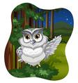 White owl vector image