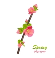 Branch of Japanese Quince Chaenomeles japonica vector image