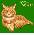 Maine Coon cat vector image