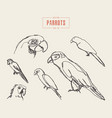 set realistic parrots hand drawn sketch vector image