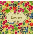 Nature background design with berries vector image