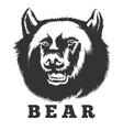 roaring bear emblem vector image