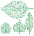 set of detailed green leaves vector image