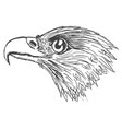 head of eagle vector image