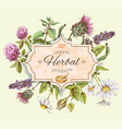 Herbal vintage banner vector image