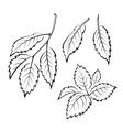 Elm Leaves Pictogram Set vector image vector image