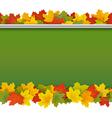 School Blackboard with Maple Leaves vector image