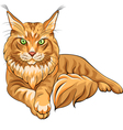 Maine Coon American Longhair cat vector image