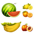 ripe striped watermelon realistic juicy fruits vector image