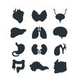 Internal organs silhouette vector image