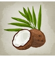 fruit coconut vector image