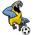 macaw bird playing soccer vector image