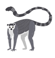Lemur monkey rare animal vector image
