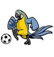 macaw bird soccer mascot vector image