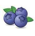 blueberries 01 vector image