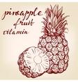 fruit pineapple set hand drawn llustration vector image