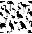 seamless pattern various kinds of birds vector image