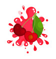ripe cherries juice splashing colorful fresh vector image
