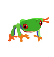 tropical frog vector image