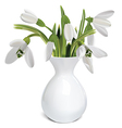 Bouquet of snowdrops in a vase vector image