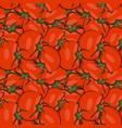 seamless pattern hand drawn tomato vector image