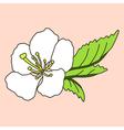 hand drawn cherry blossom vector image
