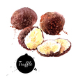 Watercolor hand drawn black truffles Isolated eco vector image
