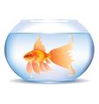 Goldfish in aquarium vector image vector image