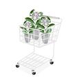 Fresh Calotropis Gigantea in A Shopping Cart vector image vector image