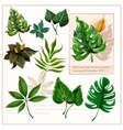 Green tropical leaves pictograms set vector image