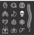 Human internal organs detailed icons set vector image vector image