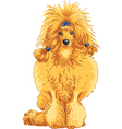 color sketch of the dog red Poodle breed vector image