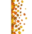 Card with maple autumn leaves and space for text vector image