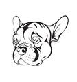 sad french bulldog vector image