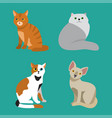cat breed cute pet portrait fluffy young adorable vector image