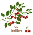 Green branch with red cherries vector image