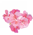 Pink flowers bouquet isolated on white vector image