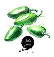 Watercolor hand drawn pepper jalapeno Isolated eco vector image