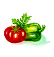 tomato and pepper vector image vector image