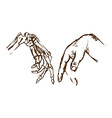 Hand skeleton vector image
